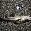 K1さんの千葉県袖ケ浦市での釣果写真