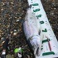 MOQさんの北海道島牧郡での釣果写真
