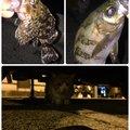 もっちゃんさんの神奈川県小田原市でのカサゴの釣果写真