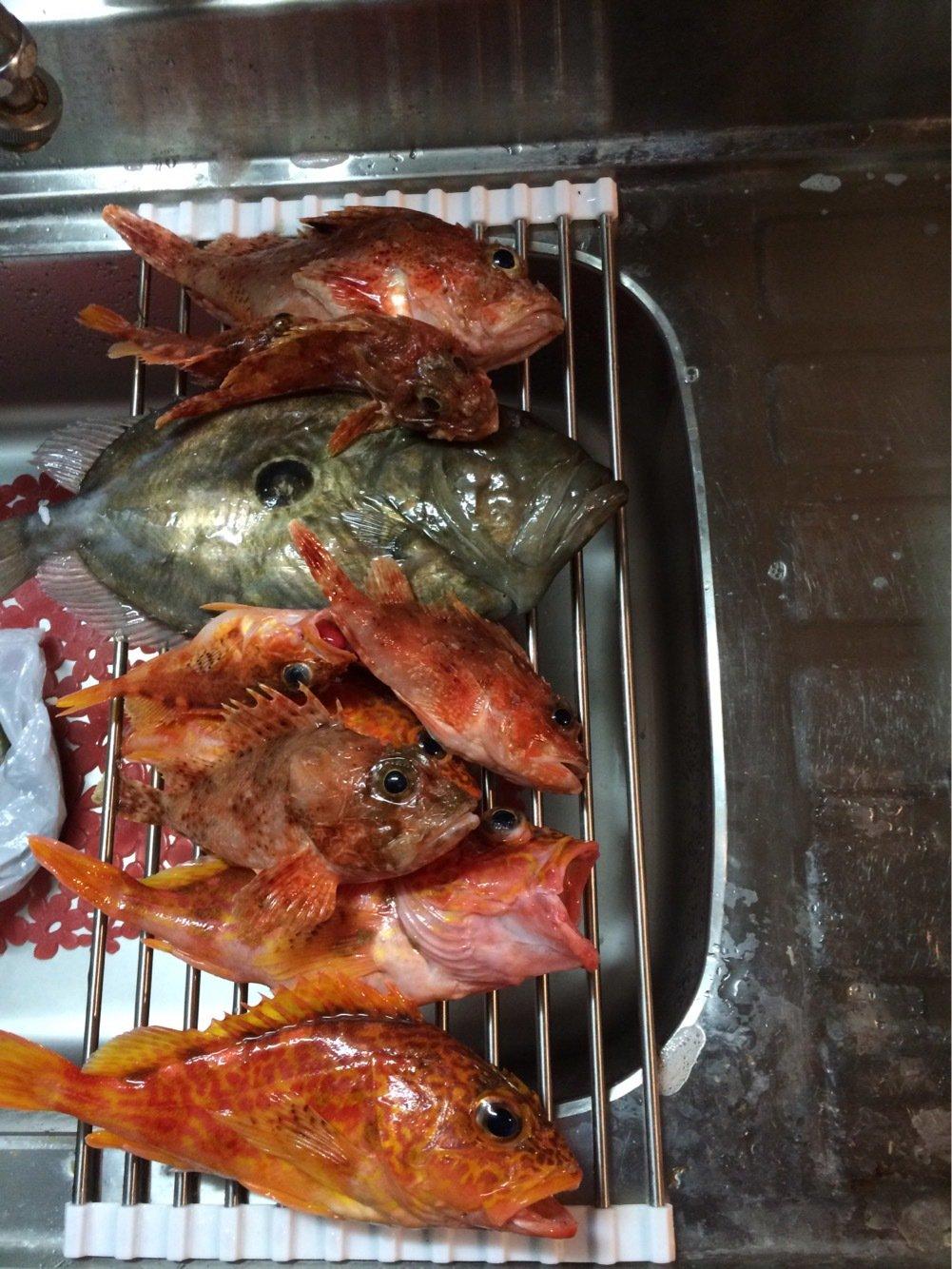 keiさんの投稿画像,写っている魚はオニカサゴ