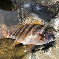 カナリ屋さんの和歌山県東牟婁郡での釣果写真