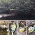 かずmonさんの兵庫県三田市での釣果写真