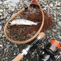 kappatoshiさんの奈良県御所市でのヤマメの釣果写真