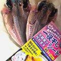 アオリイカオ🦑さんの石川県鳳珠郡での釣果写真