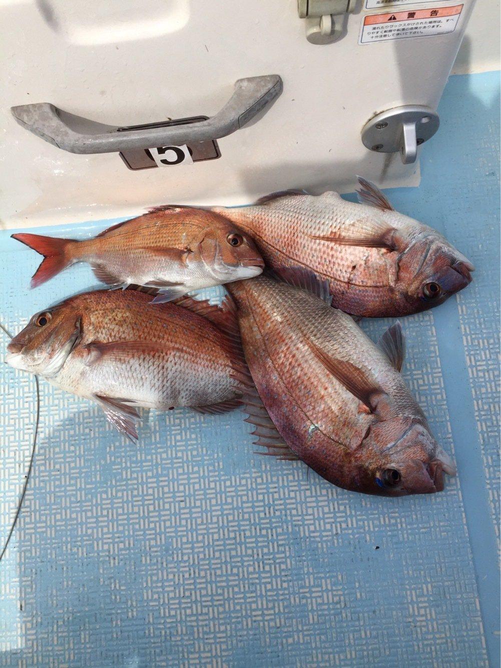 海碧丸さんの投稿画像,写っている魚は