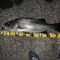 masatoさんの和歌山県東牟婁郡での釣果写真