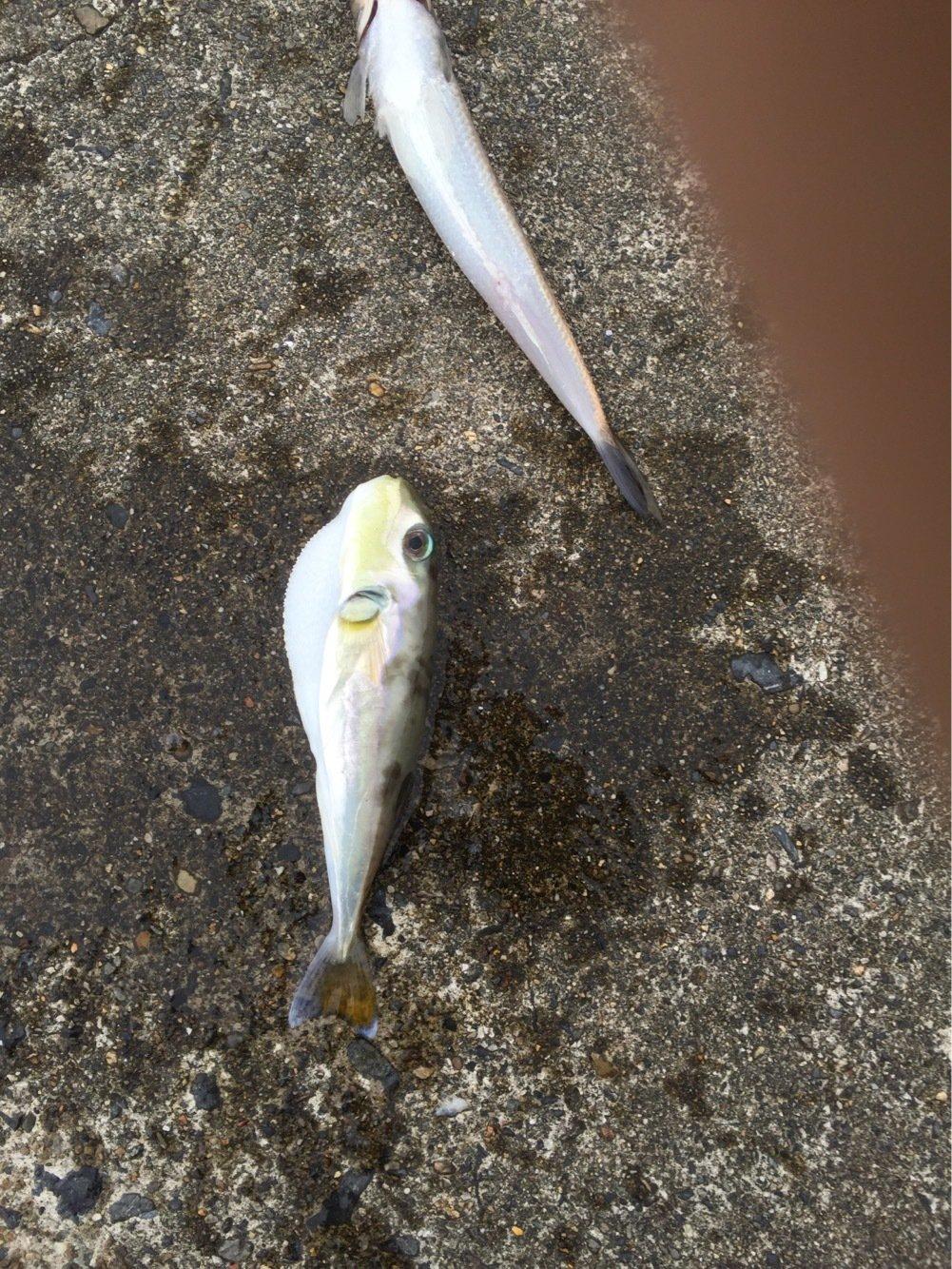 まるおさんの投稿画像,写っている魚は