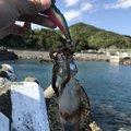 もじょさんの和歌山県東牟婁郡での釣果写真