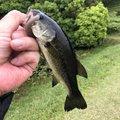 釣り課長さんの香川県仲多度郡での釣果写真
