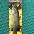 ひでくろうさんの長野県上水内郡でのスモールマウスバスの釣果写真