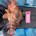 クロアルさんの石川県能美郡での釣果写真