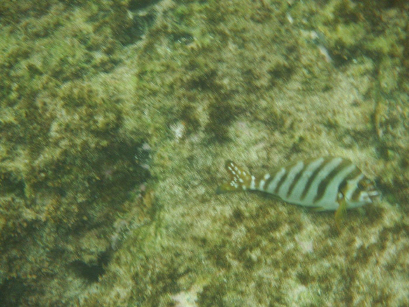 たくさんの投稿画像,写っている魚はタカノハダイ