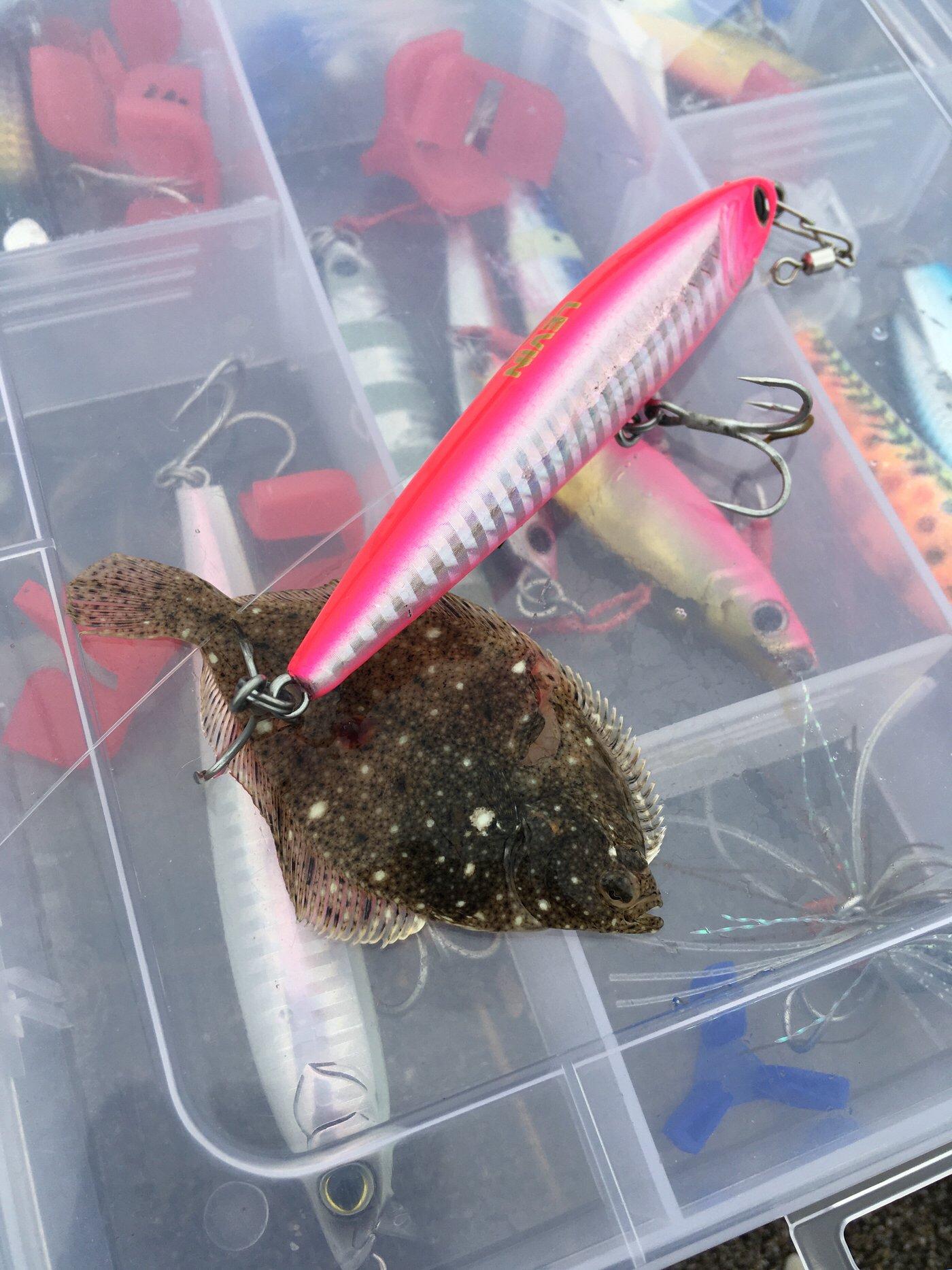 大和魂.さんの投稿画像,写っている魚はカレイ,フグ