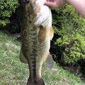 ちゃんぐむさんの千葉県夷隅郡での釣果写真