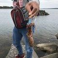 エイトマンさんの三重県志摩市での釣果写真