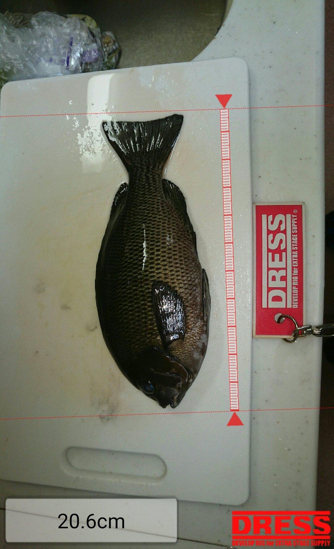 かずとみさんの投稿画像,写っている魚はメジナ