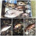 ごくうさんの長野県での釣果写真
