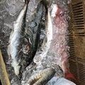 ダミージョイントさんの宮崎県日向市での釣果写真