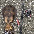 Mr.丸坊主さんの鹿児島県出水郡での釣果写真