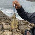 イケイケさんの宮崎県日向市での釣果写真