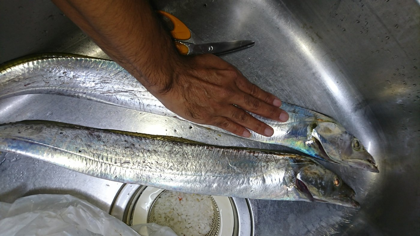 高良ケンタウルス隆太さんの投稿画像,写っている魚は