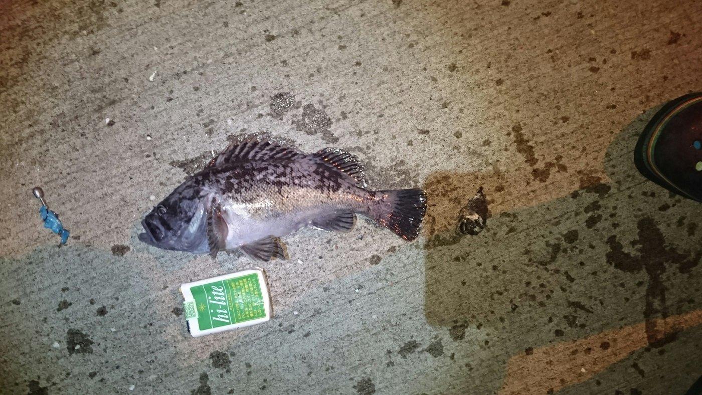 ハイラックス野郎さんの投稿画像,写っている魚はクロソイ