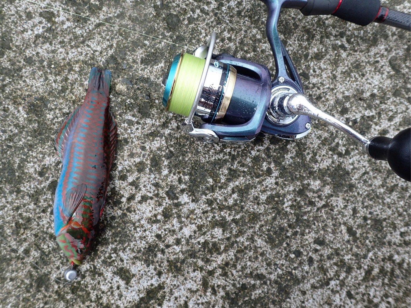 かつてのバスプロさんの投稿画像,写っている魚はニシキベラ