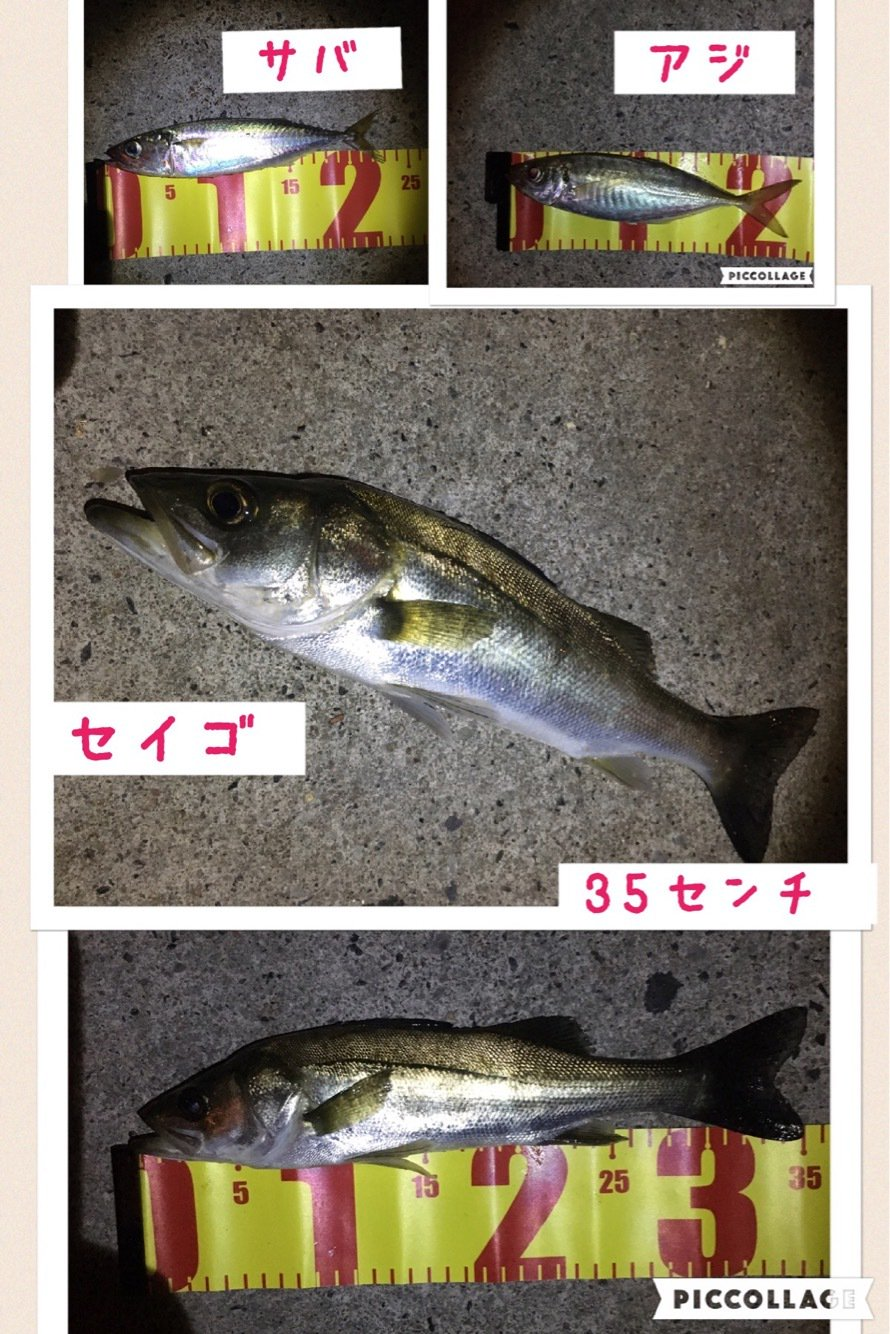 Angler🇯🇵TAKASHIさんの投稿画像,写っている魚はスズキ