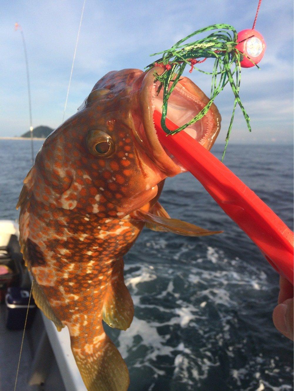 お侍さんの投稿画像,写っている魚はキジハタ