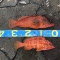 海坊主さんの熊本県天草郡での釣果写真