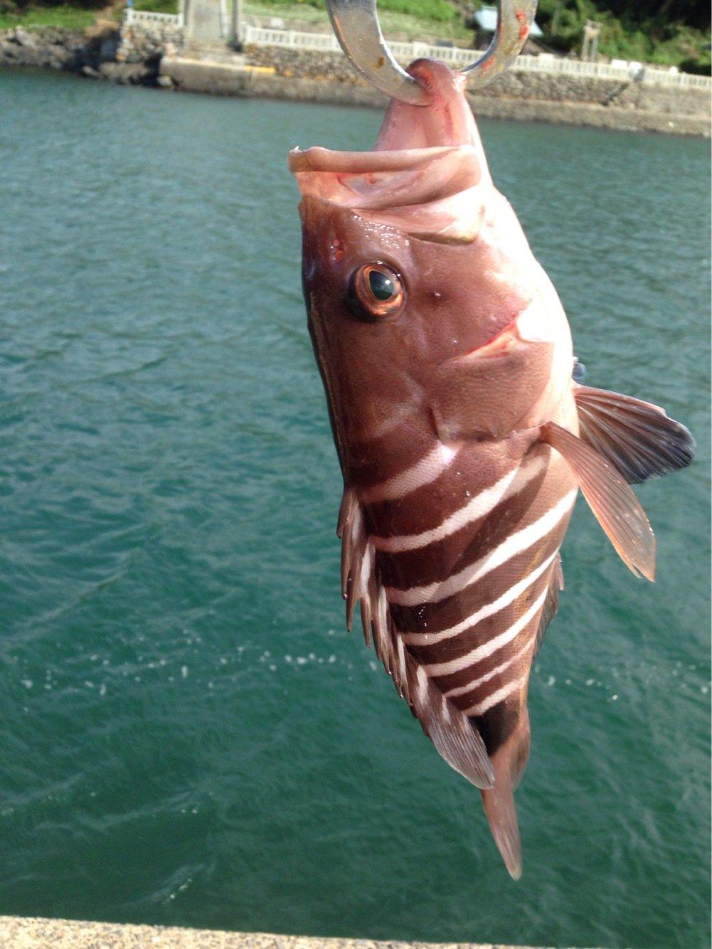 ナベさんの投稿画像,写っている魚は