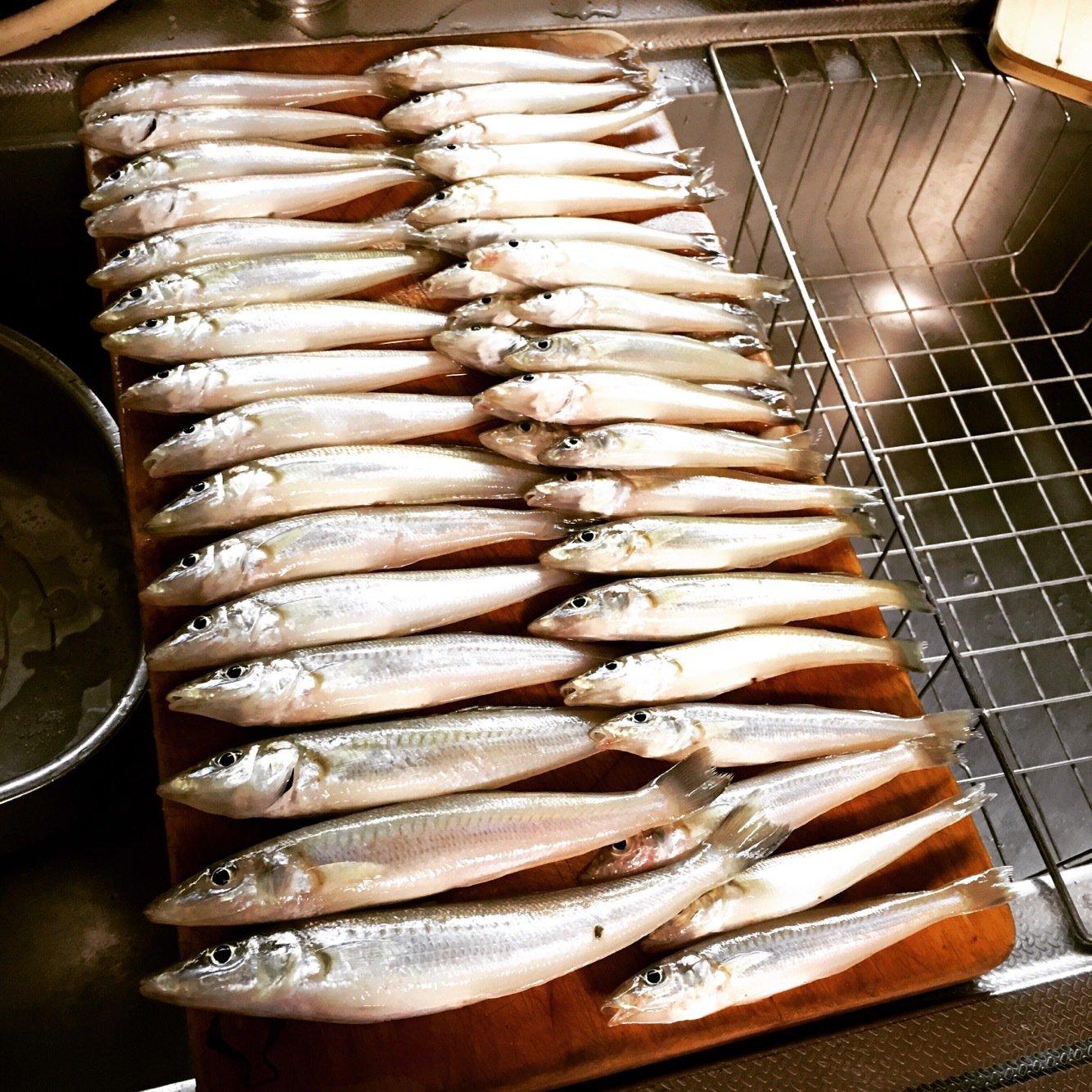 MM1211さんの投稿画像,写っている魚は