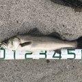 うささんの三重県桑名市での釣果写真
