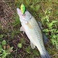 サスケさんの新潟県妙高市での釣果写真