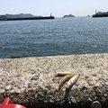 尾鷲キング亀さんの三重県尾鷲市での釣果写真