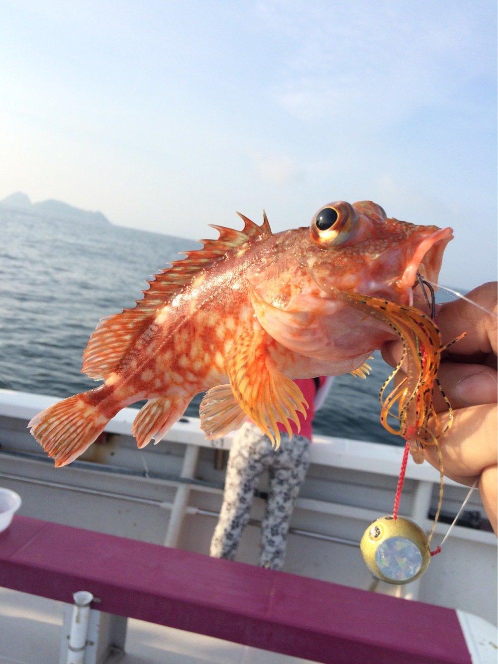 お侍さんの投稿画像,写っている魚はカサゴ