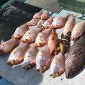 じゅんたろすさんのイトヨリダイの釣果写真