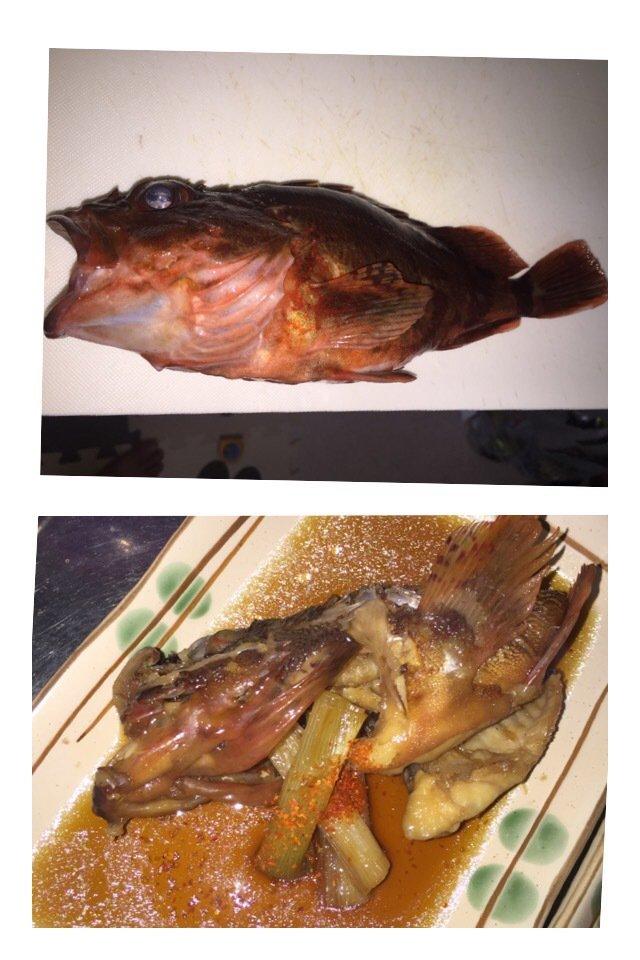 スチームボウイさんの投稿画像,写っている魚はカサゴ