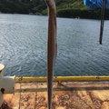 アオタカさんの三重県志摩市での釣果写真