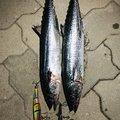 大和さんの和歌山県和歌山市での釣果写真