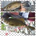 ニコさんの福島県福島市での釣果写真