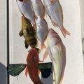 岩田 あすかさんのイトヨリダイの釣果写真