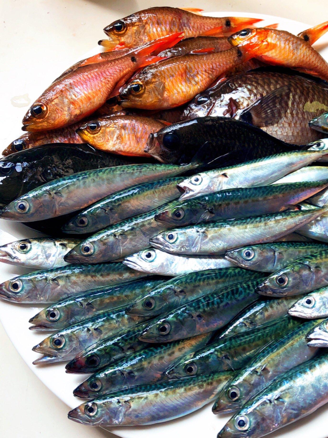 Genさんの投稿画像,写っている魚はマサバ,ネンブツダイ,メジナ,スズメダイ