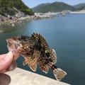 やっちんさんの和歌山県西牟婁郡での釣果写真