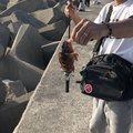 ふみおさんの和歌山県有田市での釣果写真