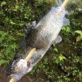 ryuさんの神奈川県愛甲郡での釣果写真