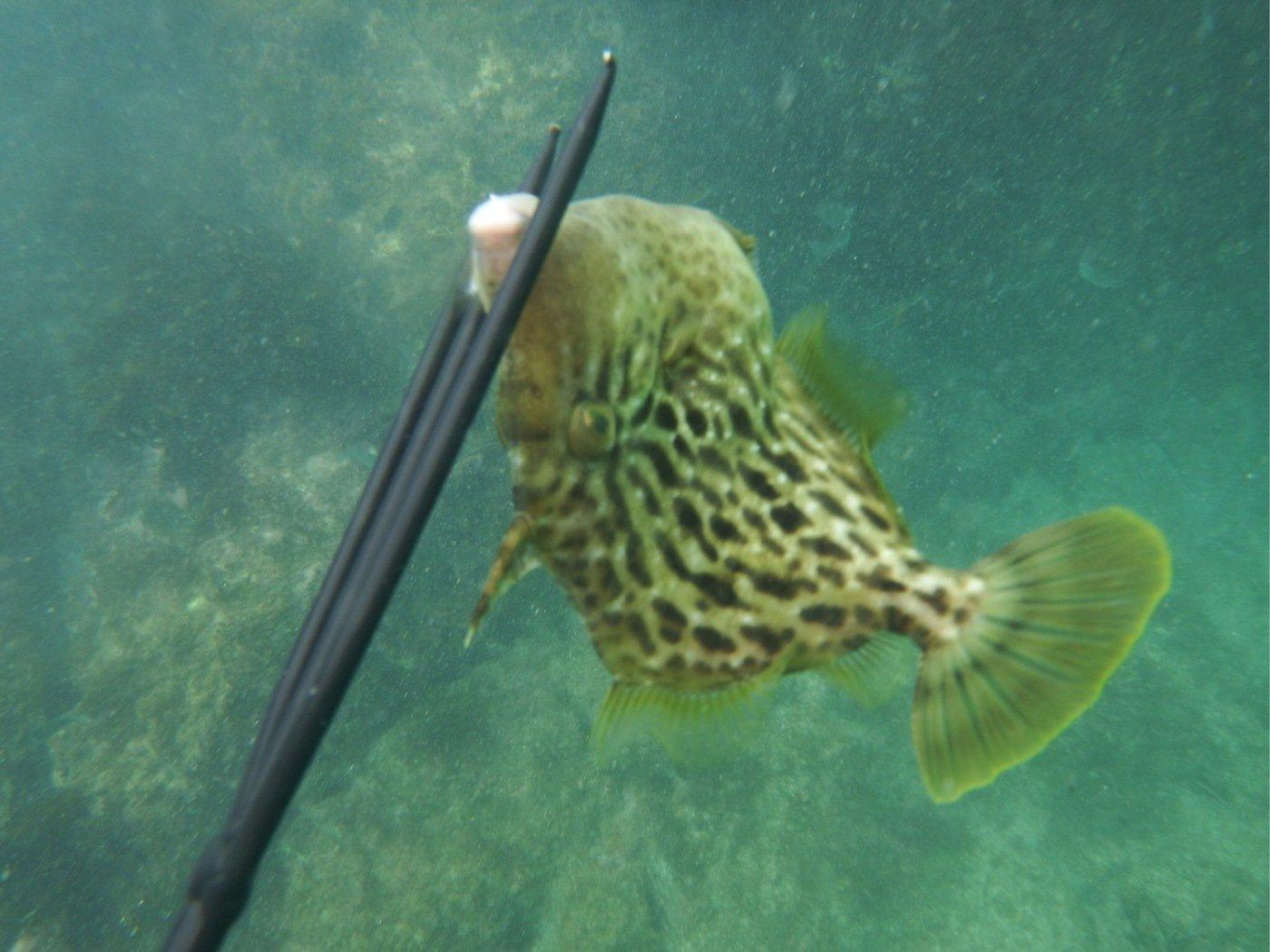 たくさんの投稿画像,写っている魚はカワハギ