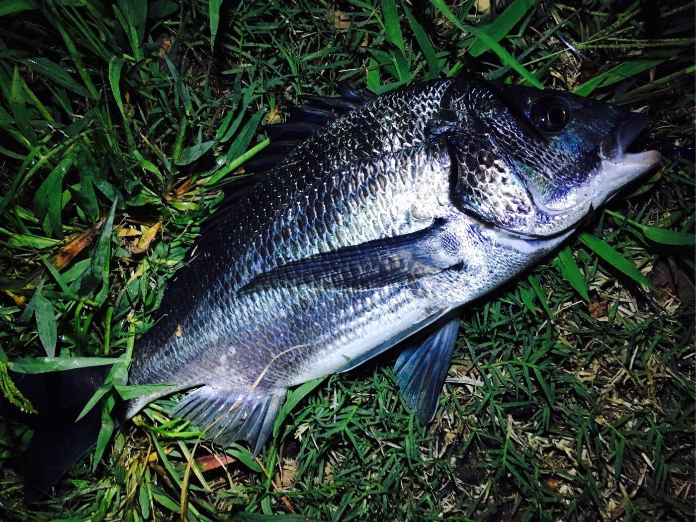 ヌーランさんの投稿画像,写っている魚は
