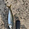 ミータさんの長崎県五島市での釣果写真