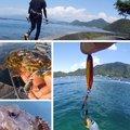 KRO さんの静岡県沼津市でのマサバの釣果写真